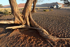 Namib desert with the Deadvlei and Sossusvlei in Namibia. The Namib desert with the Deadvlei and Sossusvlei in Namibia royalty free stock image
