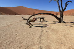 Namib desert with the Deadvlei and Sossusvlei in Namibia Royalty Free Stock Images