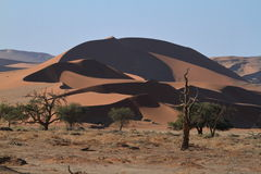 Namib desert with the Deadvlei and Sossusvlei in Namibia Stock Images