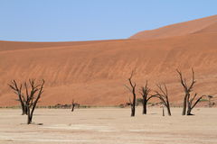 Namib desert with the Deadvlei and Sossusvlei in Namibia. The Namib desert with the Deadvlei and Sossusvlei in Namibia royalty free stock images