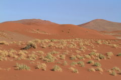 Namib desert with the Deadvlei and Sossusvlei in Namibia. The Namib desert with the Deadvlei and Sossusvlei in Namibia stock photography