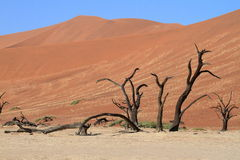 Namib desert with the Deadvlei and Sossusvlei in Namibia. The Namib desert with the Deadvlei and Sossusvlei in Namibia stock photo
