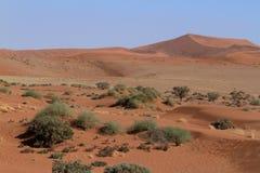 Namib desert with the Deadvlei and Sossusvlei in Namibia. The Namib desert with the Deadvlei and Sossusvlei in Namibia Royalty Free Stock Image