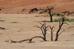 Namib desert with the Deadvlei and Sossusvlei in Namibia. The Namib desert with the Deadvlei and Sossusvlei in Namibia Stock Images