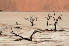 Namib desert with the Deadvlei and Sossusvlei in Namibia. The Namib desert with the Deadvlei and Sossusvlei in Namibia royalty free stock photos