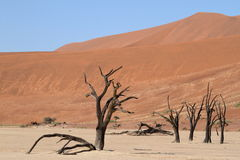 Namib desert with the Deadvlei and Sossusvlei in Namibia. The Namib desert with the Deadvlei and Sossusvlei in Namibia royalty free stock photo