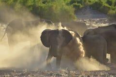 Namib desert elephant stock image