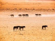 The Namib Desert feral horses herd at waterhole near Aus, Namibia, Africa Stock Images