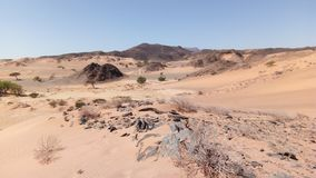 Namib desert. Landscape in the forbidden zone of the Namib royalty free stock image