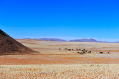 Namib Desert (Namibia) Stock Photos