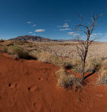 Namib Desert (Namibia) royalty free stock images