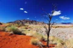 Namib Desert (Namibia) royalty free stock photo