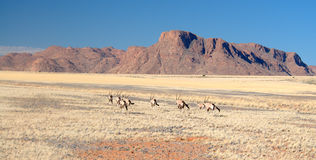 African Landscapes - Namibia Royalty Free Stock Photo
