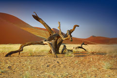 Namib Desert (Namibia). The Namib Naukluft National Park occupies an area of around 50 000 km², stretching about 1600 km along the Atlantic Ocean coast of stock photography