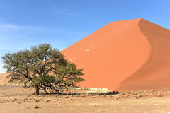 Namib Desert, Namibia Royalty Free Stock Photo