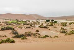 Namib desert in Namibia Stock Photos