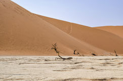 Namib desert in Namibia. Namib desert scenery with dead acacia trees around Deadvlei in the Sossusvlei area in Namibia, Africa Stock Photography