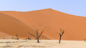 Namib desert in Namibia. Namib desert scenery with dead acacia trees around Deadvlei in the Sossusvlei area in Namibia, Africa Royalty Free Stock Image