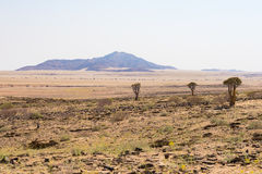 The Namib desert, roadtrip in the wonderful Namib Naukluft National Park, travel destination and highlight in Namibia, Africa. Bra Stock Images