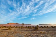 The Namib desert, roadtrip in the wonderful Namib Naukluft National Park, travel destination in Namibia, Africa. Braided Acacia tr Royalty Free Stock Photos