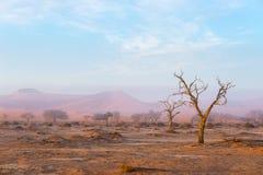 The Namib desert, roadtrip in the wonderful Namib Naukluft National Park, travel destination in Namibia, Africa. Braided Acacia tr Stock Photography