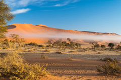 The Namib desert, roadtrip in the wonderful Namib Naukluft National Park, travel destination in Namibia, Africa. Braided Acacia tr Royalty Free Stock Images