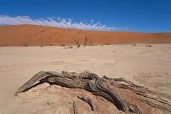 Namib desert, Sossusvlei, dead trees Stock Images