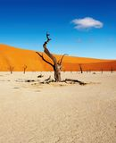 Namib Desert, Sossusvlei, Namibia Royalty Free Stock Photos