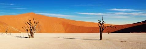 Namib Desert, Sossusvlei, Namibia. Dead tree in Dead Vlei, Sossusvlei, Namib Desert, Namibia Stock Images