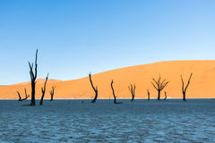 Namib Desert, Sossusvlei at sunset royalty free stock photo