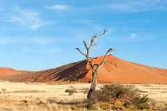 The namib in namibia Royalty Free Stock Photo