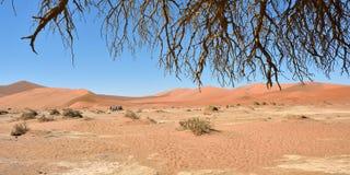 Namib-Naukluft国家公园,纳米比亚,非洲 免版税库存图片