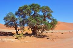 Namib-Naukluft εθνικό πάρκο, έρημος Namib, Ναμίμπια, Αφρική Στοκ εικόνες με δικαίωμα ελεύθερης χρήσης