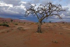 Namib-Naukluft-национальный парк Стоковая Фотография RF