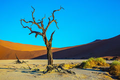 Namib-Naukluft National Park stock photos
