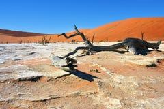 Namib-Naukluft National Park, Namibia, Africa. Dead Camelthorn Trees against blue sky in Deadvlei, Sossusvlei. Namib-Naukluft National Park, Namibia, Africa stock image