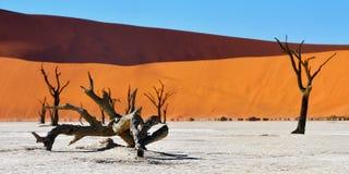 Namib-Naukluft National Park, Namibia, Africa. Dead Camelthorn Trees against blue sky in Deadvlei, Sossusvlei. Namib-Naukluft National Park, Namibia, Africa stock photos