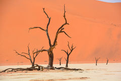 Namib-Naukluft Park Stock Images