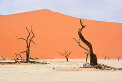 Namib-Naukluft Park Stock Photo