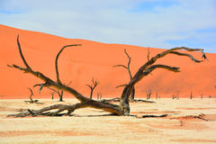 Namib-Naukluft Park Royalty Free Stock Photo