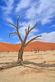 Namib-Naukluft Park Royalty Free Stock Images