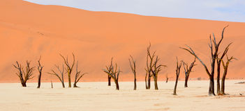 Namib-Naukluft Park Stock Photography
