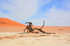 Namib-Naukluft Park Stock Photos