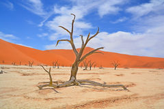 Namib-Naukluft Park Royalty Free Stock Photography