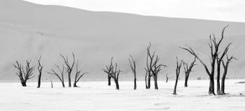 Namib-Naukluft Park in Namibia Royalty Free Stock Photography