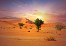 Namib Naukluft pustynia przy wschodem słońca z dobrym cloudscape w Namibia afryce poludniowa Fotografia Royalty Free