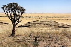 Namib-nuakluft öken - Namibia Royaltyfri Foto