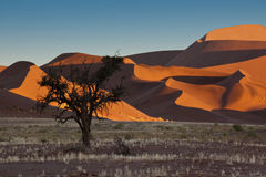 Namib-nuakluft Desert - Sossusvlei - Namibia. Dawn sunlight on the sand dunes in the Namib-nuakluft Desert near Sossusvlei in Namibia Stock Photos