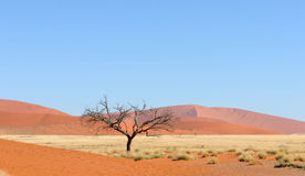 Namib panorama Royalty Free Stock Images