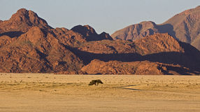 Namib. Panorama in the Namib Naukluft-national park Royalty Free Stock Photos